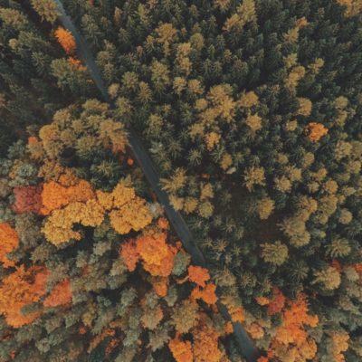 Fall & Fresh Beginnings